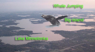 whale in lake minnetonka